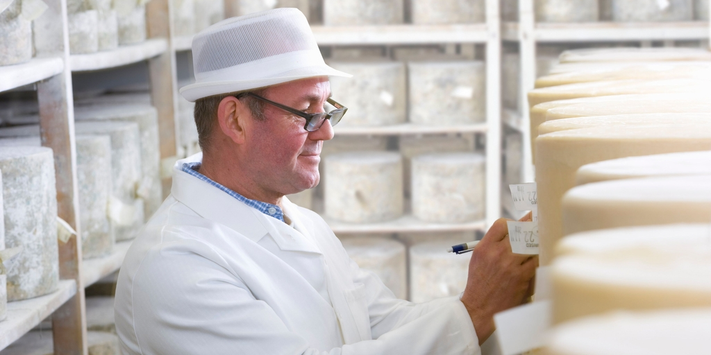 Dairy plant worker inspecting cheese